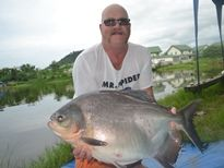 Thai Fish Species - Pacu