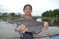 Thai Fish Species - Thai Mahseer