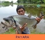 Photo Gallery - Payara