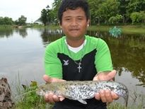 Thai Fish Species - Wels Catfish