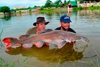 Thai Fish Species - Thai Redtail Catfish