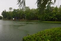 View of Palm Tree Lagoon Fishery