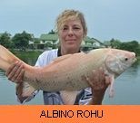 Photo Gallery - Albino Rohu