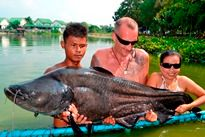 Thai Fish Species - Wallago Leeri