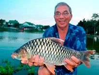 Thai Fish Species - Golden Tinfoil Barb