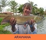 Photo Gallery - Arawana