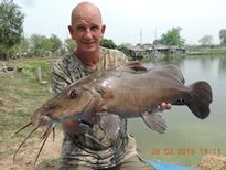 Thai Fish Species - Giraffe Catfish