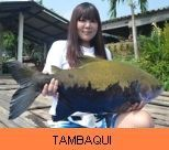 Photo Gallery - Tambaqui