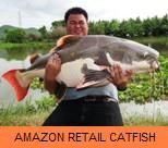 Photo Gallery - Amazon Redtail Catfish