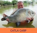 Photo Gallery - Catla Carp