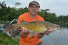 Yellow Catfish