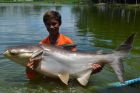 Big-Y Catfish