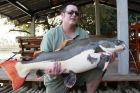 Amazon Redtail Catfish