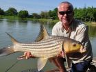 Juliens Golden Price Carp