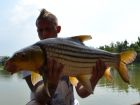 Juiens Golden Price Carp