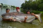 Mekong Catfish