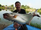 Thai Catfish Shark