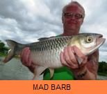 Photo Gallery - Mad Barb