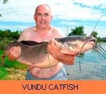 Thai Fish Species - Vundu Catfish