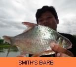 Photo Gallery - Smith's Barb