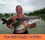 Photo Gallery - Thai Redtailed Catfish